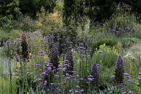 wilde bloemen in duitsland perennial power voor de mooiste borders tuinenstruinen org