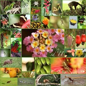 flora fauna ciudad del saber 2011 mimosa macro