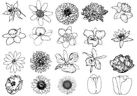 ink drawing flower brushes  photoshop brushes