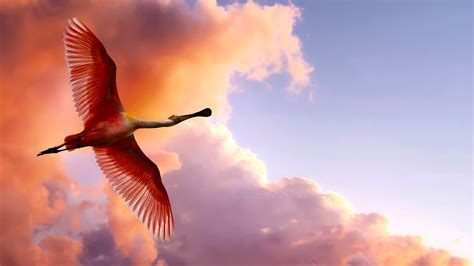 Beautiful bird flying in sky HD picture   New hd wallpaperNew hd wallpaper