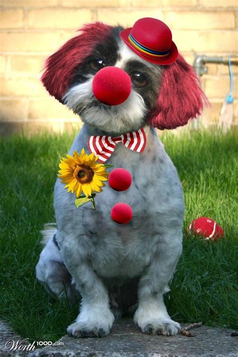 clown costume for dogs clown pet costumes