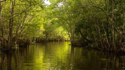 apalachicola river boat tours apalachicola vacation travel guide and tour information