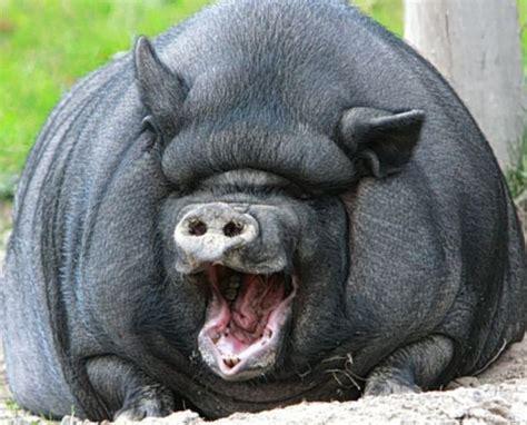 fotos animales riendose animales riendose como humanos yapa friki net