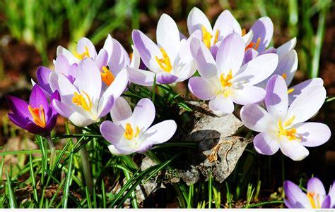 spring floral spring flowers background 2015 2016