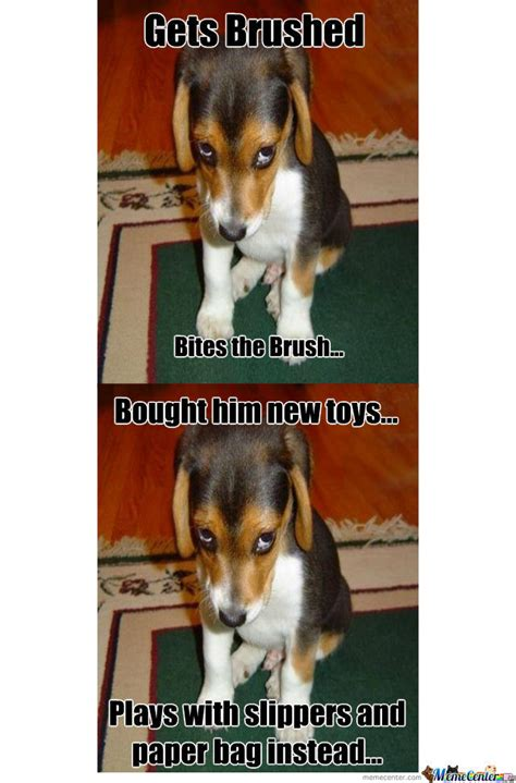 New Dog Meme - new meme quot silly puppy quot by godofmemes609 meme center