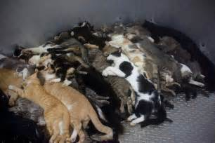Euthanizing Small Animals At Home Florida Who Hoarded 92 Dead Sick Cats Sentenced To 3