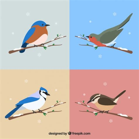 Set Snowy set of beautiful birds of snowy branches vector free