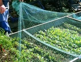 protection naturelle des r 233 coltes au potager