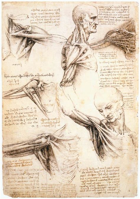 Drawing Anatomy by 9 Drawing Exercises From Leonardo Da Vinci With Exles