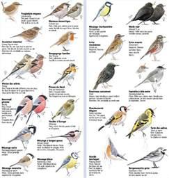identifier les oiseaux des jardins les oiseaux des jardins