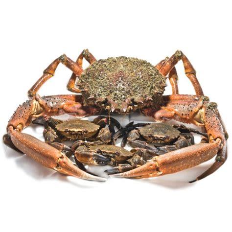 cuisiner araign馥 de mer crabe tourteau araign 233 e de mer julie andrieu