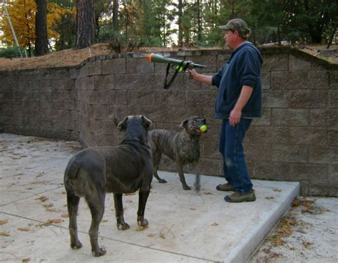 tennis thrower for dogs automatic launcher for dogs diy diy do it your self