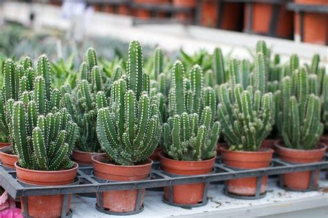 what does succulent mean in the garden with mariani how to care for your succulents a pair a spare