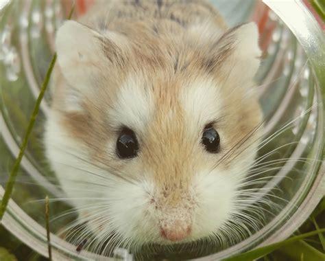 muizen in huis muizen en ander ongedierte in huis voorkomen stofzuigerzen