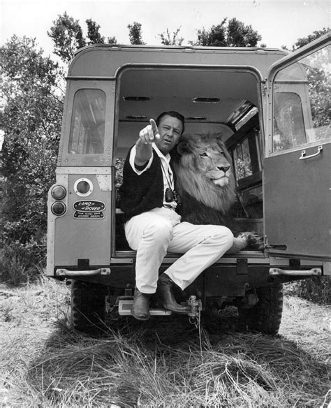 land rover daktari william holden with zamba the lion 1960 s william holden