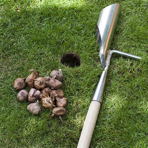Crocus Bulb Planter by Buy Rhs Handled Bulb Planter Delivery By Crocus
