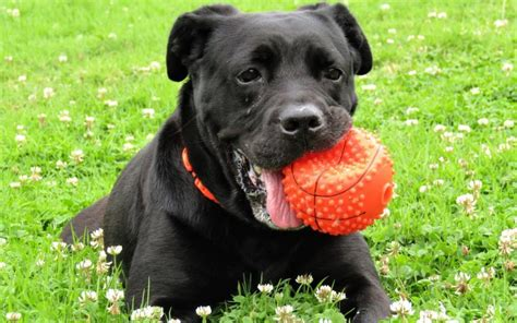 cerenia for dogs is your anxious around other dogs canna pet 174
