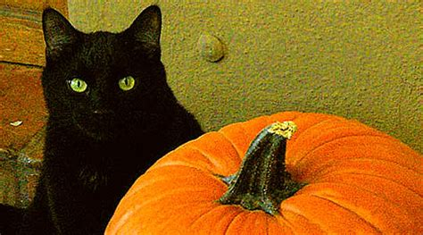 cat and pumpkin 28 cat pumpkin stencils for a spooky