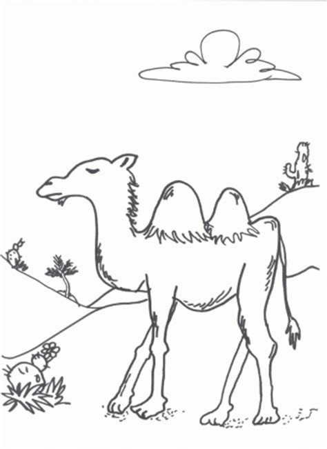 imgs for gt desert animals and plants coloring pages