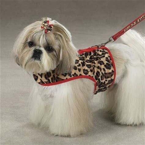 shih tzu boots repinned sophisticated shih tzu trim dogs beautiful snow and boots