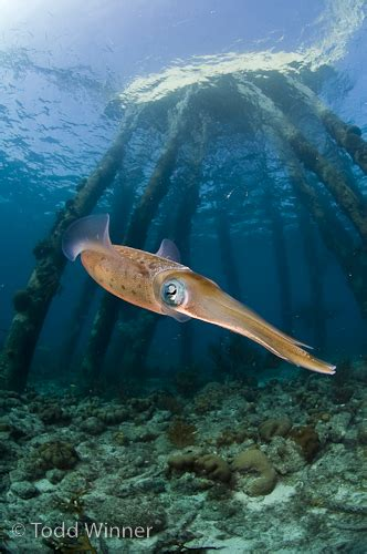 bonaire dive diving bonaire underwater photography guide