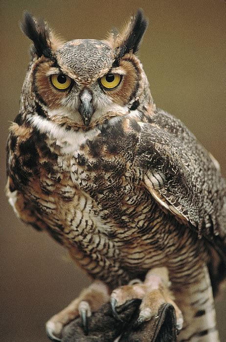 Craft phesine owl ornament frames