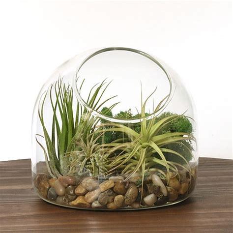 Desk Terrarium desk air plant terrarium kit