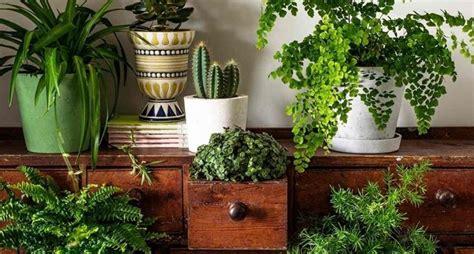 arredare il terrazzo con le piante arredare con piante aromatiche idee per il design della casa