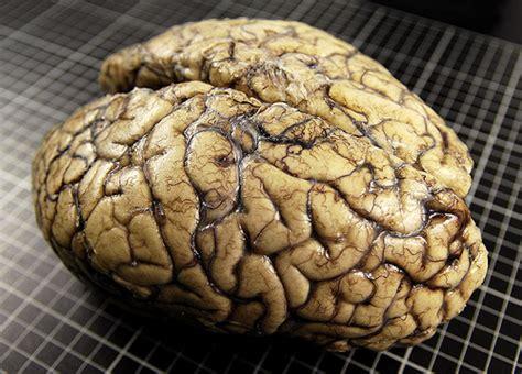 imagenes reales cerebro humano nuestro tercer cerebro la salud esta en la mente