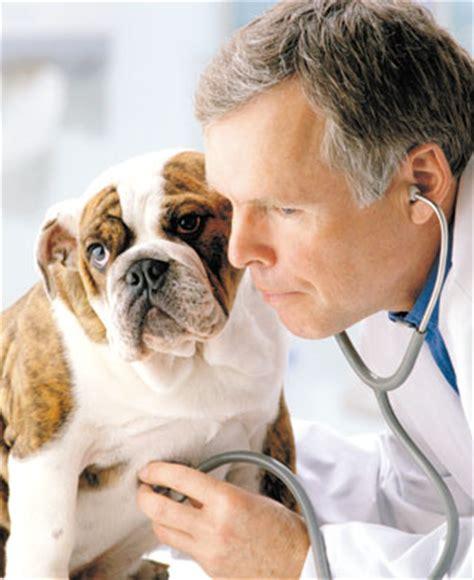 imagenes de medicas veterinarias definici 243 n de medicina veterinaria 187 concepto en