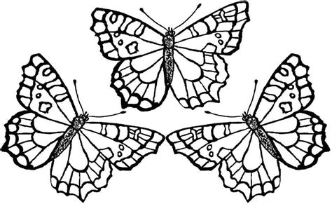 butterflies to color in butterfly coloring pages on with hd resolution 1250x769