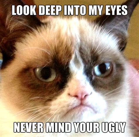 Funny Ugly Memes - ugly cat meme pictures to pin on pinterest pinsdaddy