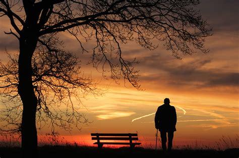 image libre soleil silhouette arbre crepuscule