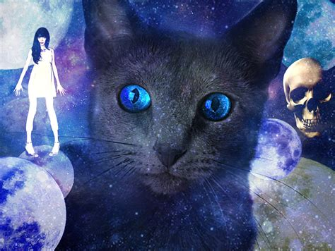 wallpaper galaxy cat galaxy cat by sakurakonan on deviantart