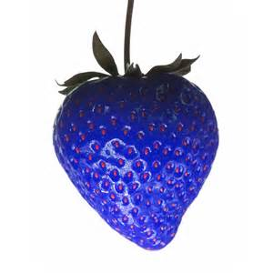 Kitchen Idea Pictures photograph of a blue strawberry by tim booth