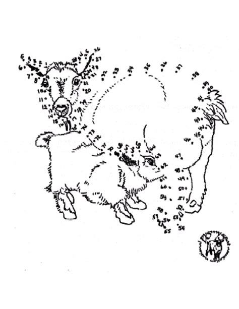 Pygmy Goat Coloring Page | pygmy coloring page mom baby connect the dots pygmy goat