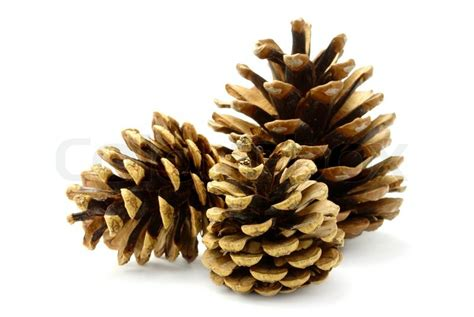 group of three pine cones on white background stock
