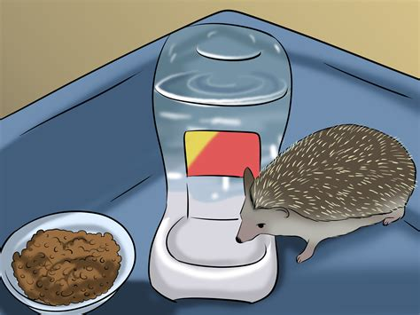 make a house how to make a home for your hedgehog 7 steps with pictures