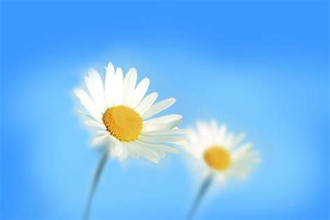 win with flower hd flower wallpapers for windows 8 www pixshark com