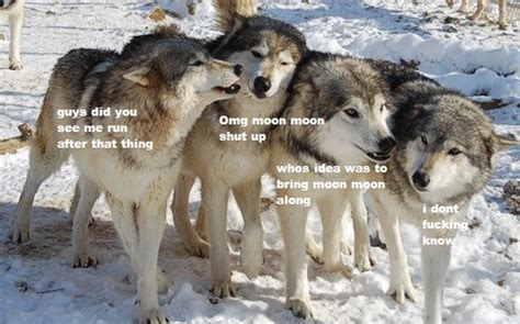 Wolf Pack Meme - hahaha i am sooooo loving this moon moon meme xd