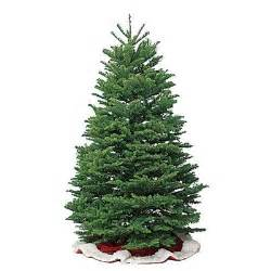 know the types of common christmas trees allyou com