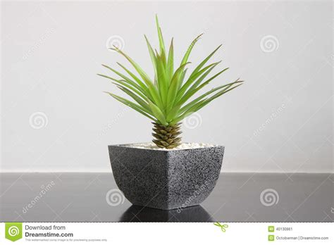 superior Plant Decoration In Living Room #1: small-green-plant-home-decoration-modern-style-40130861.jpg