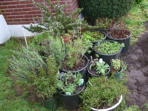 container herb gardening container herb garden flickr photo sharing