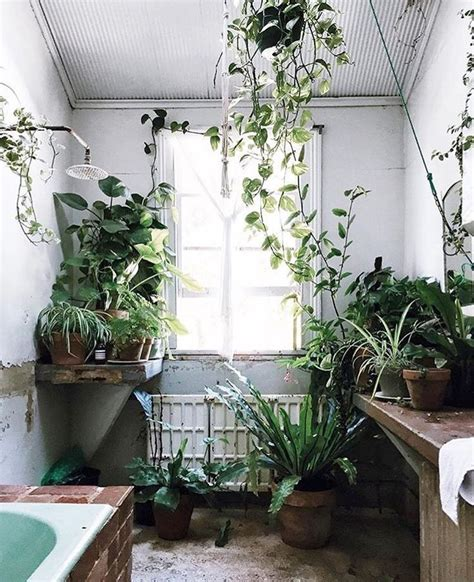 indoor plants bathroom 25 best ideas about bathroom plants on pinterest plants in bathroom indoor plants