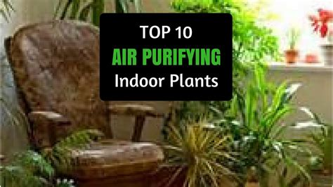 best 10 air purifying plants with nasa ratings blog collection of best 10 air purifying plants 28 best air