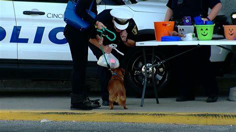 jacks pets cincinnati westwood cincinnati collect pet supplies and donations in westwood wkrc