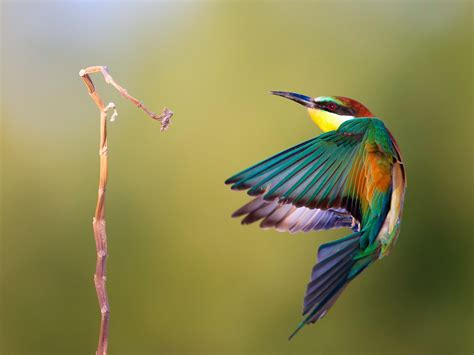 Beautiful Kingfisher Bird Images Free Photos Download Beautiful Bird Flying