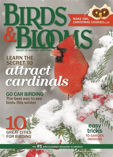 backyard birding magazine 83 best come fly with me tips advice images on