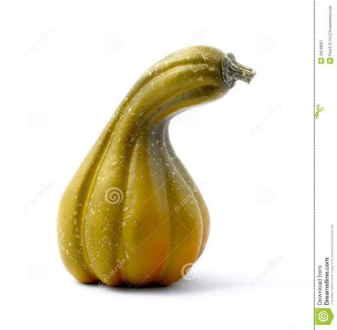 Green Gourd L by Green Gourd On White Stock Image Image Of Autumn Garden