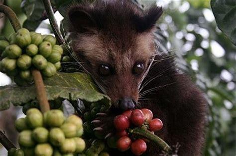 indonesian coffee cream   crop worldpressorg